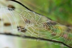 Descensos del agua en un web de araña encendido Foto de archivo libre de regalías