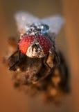 Descensos del agua en una mosca Imagen de archivo libre de regalías