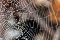 Descensos del agua en Web de araña Imagen de archivo