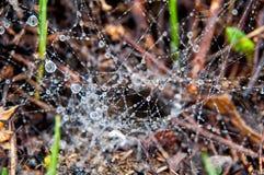 Descensos del agua en Web de araña Fotografía de archivo