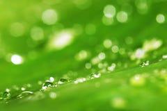 Descensos del agua y fondo verde de la textura de la hoja Foto de archivo libre de regalías