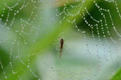 Descensos del rocío en un spiderweb fotos de archivo