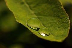 Descensos en las hojas verdes Fotografía de archivo libre de regalías