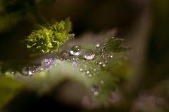 Descensos en las hojas verdes Imagen de archivo libre de regalías