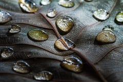 Descensos secos de la hoja y del agua Foto de archivo libre de regalías