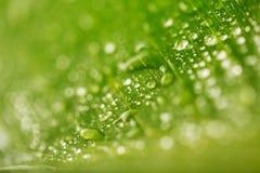 Descensos verdes abstractos de la textura y del agua de la hoja para el fondo Imagen de archivo libre de regalías