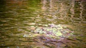 Descensos y rocas de la cascada en naturaleza almacen de metraje de vídeo