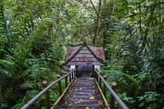 Descent to the arbor in the jungle. Forest Royalty Free Stock Photos