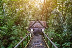 Descent to the arbor in the jungle. Forest Royalty Free Stock Photography