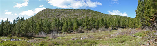 Deschutes National Forest Panorama Royalty Free Stock Photos