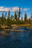 The Deschutes River. High in the Cascade Mountains the Deschutes River begins its long journey to meet the Columbia Stock Photo