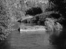 Deschutes River at Cline Falls. The Deschutes River flows through Cline Falls State Park in Central Oregon royalty free stock photos