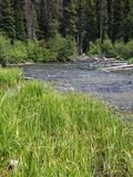 Deschutes River near its headwaters. The lush green banks of the beautiful Deschutes River near its headwaters on a sunny summer day stock image