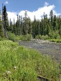 Deschutes River near its headwaters. The lush green banks of the beautiful Deschutes River near its headwaters on a sunny summer day stock photo