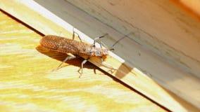 Deschutes River Salmon Fly stock video footage