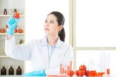Descoberta genética da pesquisa da alteração do tomate pelo cientista imagem de stock royalty free
