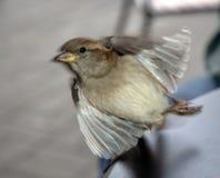 Descolagem pequena do pássaro fotografia de stock
