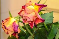 Descoloramiento de las flores Fotografía de archivo