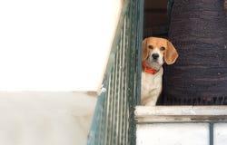 Desconfianza del perro Foto de archivo libre de regalías