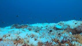 Descoramento coral imagens de stock