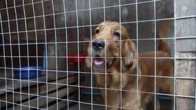 Descortezamiento del perro cerrado en jaula almacen de metraje de vídeo
