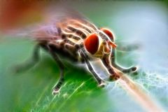 Electric flies. Describe a nature lives on electric world. A flies and leaf lives in electric world Royalty Free Stock Photo