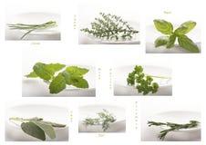 Descripción de hierbas comunes, en una placa blanca, contra el fondo blanco fotos de archivo libres de regalías