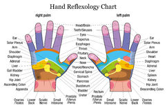 Descripción de la carta del reflexology de la mano Foto de archivo