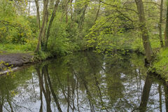 Descripción de un canal en un bosque en el estado Oosterbeek, Wassenaar, los Países Bajos del país Imágenes de archivo libres de regalías