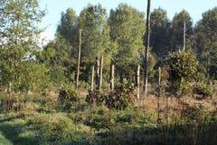 Descripción del bosque Fotografía de archivo