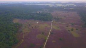 Descripción púrpura del brezo almacen de metraje de vídeo