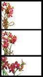 Descripteurs d'orchidée Photographie stock libre de droits