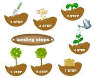 Description of planting steps. Planting a culture in steps in a stylized style Royalty Free Stock Photography