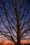 Descubra el árbol con las luces de la Navidad en la oscuridad fotografía de archivo