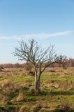 Descubra el árbol en un paisaje otoñal extenso fotos de archivo