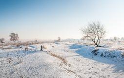 Descubra el árbol solitario en un área holandesa de la naturaleza imagen de archivo libre de regalías