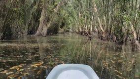 Descubra el bosque de Melaleuca en barco almacen de metraje de vídeo