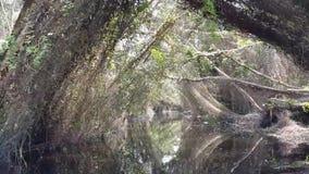 Descubra a floresta de Melaleuca pelo barco video estoque