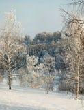 Descubra los abedules nevados en nieve profunda en la cuesta con el bosque del invierno en fondo Fotografía de archivo