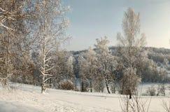 Descubra los abedules nevados en nieve profunda en la cuesta con el bosque del invierno en fondo Foto de archivo