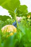 Descubra no jardim fotos de stock