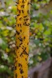 Desdobrável, fita pegajosa Moscas coladas Armadilha para moscas, insetos Imagem de Stock Royalty Free
