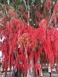 Deseando a mensajes del árbol el buen árbol del rojo de los rezos Imagen de archivo libre de regalías