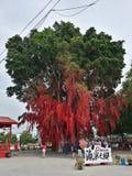Deseando a mensajes del árbol el buen árbol del rojo de los rezos Imagen de archivo