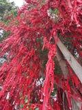 Deseando a mensajes del árbol el buen árbol del rojo de los rezos Fotos de archivo libres de regalías