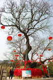 Desear el árbol Fotografía de archivo libre de regalías