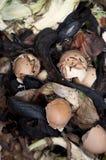 Desechos del alimento Fotografía de archivo