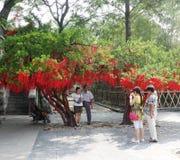 Desejando a árvore Imagem de Stock