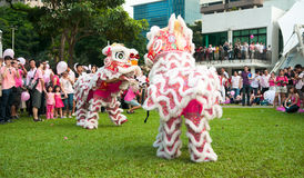 Desempenho da dança do leão no ponto cor-de-rosa Imagem de Stock