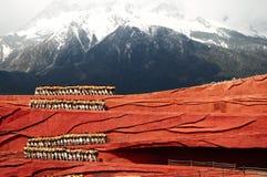Desempenho na montanha da neve fotografia de stock royalty free